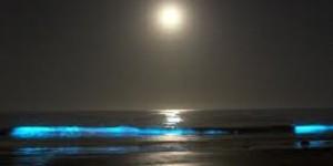 ocea-bioluminescence-960x480